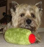 sharly-olive-toy1.JPG
