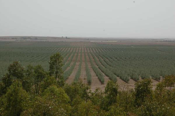 oliveraie El Borouj
