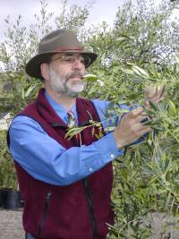 paul-vossen-olive-oil-expert