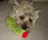sharly-olive-toy3.JPG