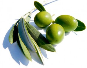 have the Leaves have the highest antioxidant levels among the various parts of the olive tree